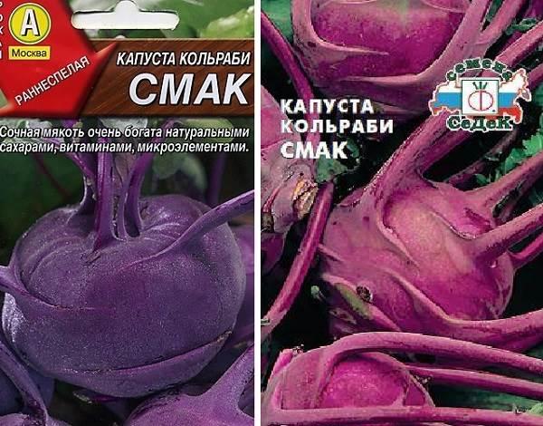 Капуста-кольраби-Описание-особенности-виды-и-выращивание-кольраби-4