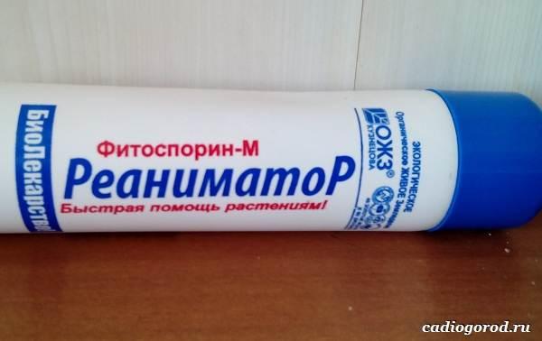 Фитоспорин-препарат-для-растений-Описание-особенности-и-применение-фитоспорина-2