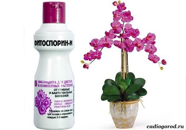 Фитоспорин-препарат-для-растений-Описание-особенности-и-применение-фитоспорина-3