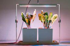 Фитолампа для растений. Как выбрать, для чего нужна и сколько стоит фитолампа