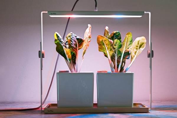 Фитолампа-для-растений-Как-выбрать-для-чего-нужна-и-сколько-стоит-фитолампа-1