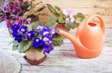 Полив комнатных растений. Факторы, виды и способы полива комнатных растений