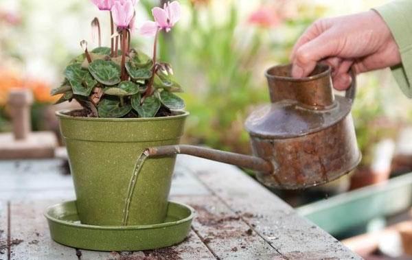 Полив-комнатных-растений-Факторы-виды-и-способы-полива-комнатных-растений-6