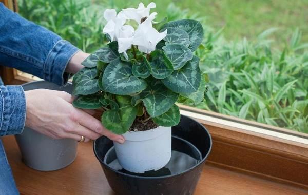 Полив-комнатных-растений-Факторы-виды-и-способы-полива-комнатных-растений-7