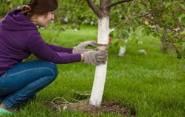 Ловчий-пояс-для-деревьев-Что-такое-зачем-нужен-и-как-сделать-ловчий-пояс-своими-руками-23-1