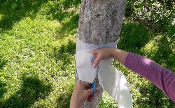 Ловчий-пояс-для-деревьев-Что-такое-зачем-нужен-и-как-сделать-ловчий-пояс-своими-руками-24