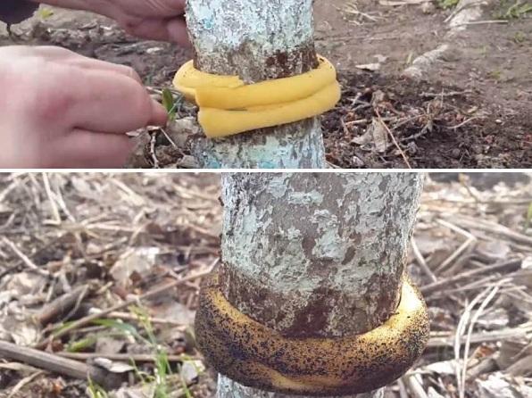 Ловчий-пояс-для-деревьев-Что-такое-зачем-нужен-и-как-сделать-ловчий-пояс-своими-руками-4