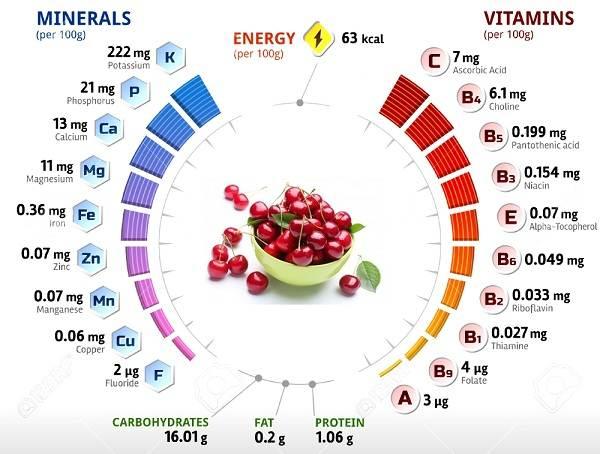 Черешня-растение-Описание-и-особенности-сорта-польза-и-вред-уход-и-выращивание-черешни-15