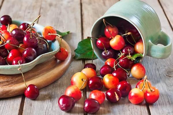 Черешня-растение-Описание-и-особенности-сорта-польза-и-вред-уход-и-выращивание-черешни-16