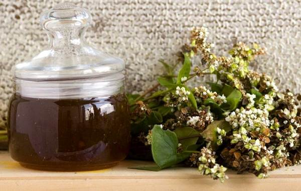 Гречиха-растение-Описание-особенности-виды-сорта-выращивание-и-свойства-гречихи-23