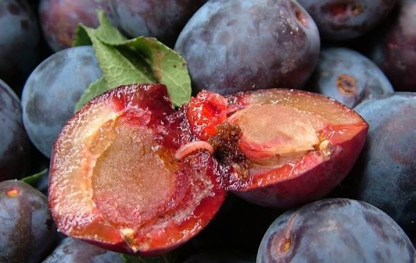 Почему-опадают-плоды-фруктовых-деревьев-и-что-делать-чтобы-спасти-урожай-6