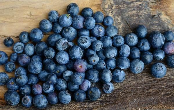 Черника-ягода-Описание-и-особенности-свойства-виды-и-сорта-уход-и-выращивание-черники-10