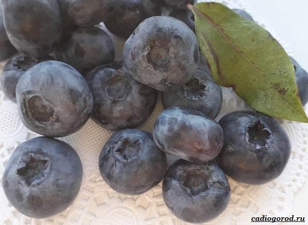 Голубика-ягода-Описание-особенности-полезные-свойства-и-выращивание-голубики-15