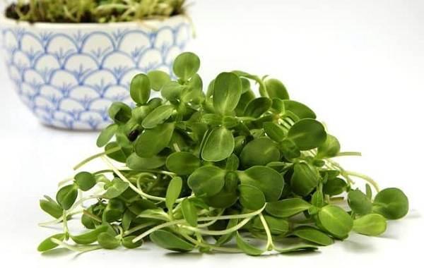 Что-такое-микрозелень-Описание-особенности-выращивание-и-полезные-свойства-18