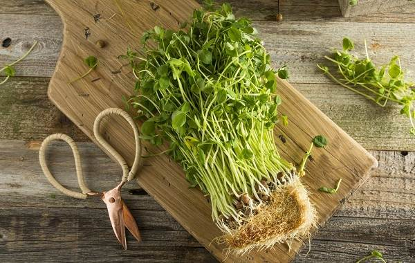 Что-такое-микрозелень-Описание-особенности-выращивание-и-полезные-свойства-3