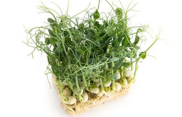 Что-такое-микрозелень-Описание-особенности-выращивание-и-полезные-свойства-4