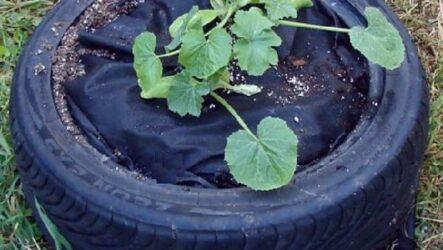 Идеи выращивания огурцов при минимальной площади