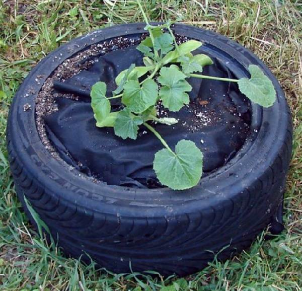 Идеи-выращивания-огурцов-при-минимальной-площади-3