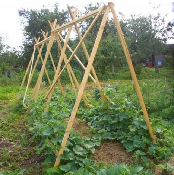 Идеи-выращивания-огурцов-при-минимальной-площади-4