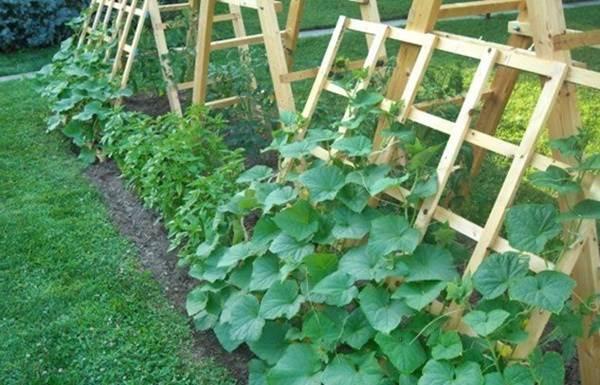 Идеи-выращивания-огурцов-при-минимальной-площади-8