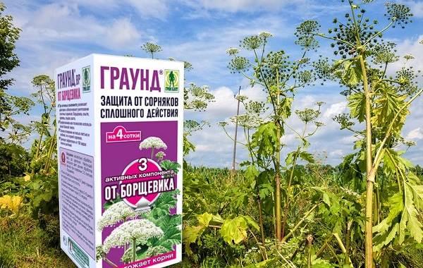 Борщевик-ядовитое-растение-чем-опасен-и-как-с-ним-бороться-10