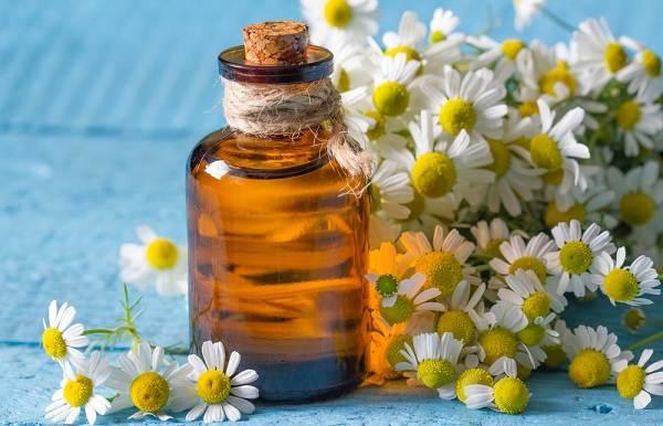 Ромашка-цветок-История-происхождение-интересные-факты-и-народные-приметы-3