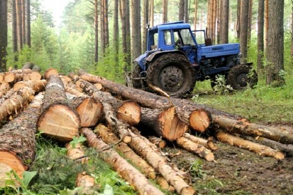 Влияние-лесов-на-природу-и-жизнь-человека-1