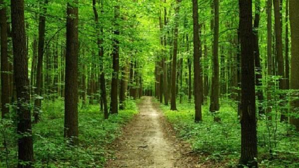 Влияние-лесов-на-природу-и-жизнь-человека-2
