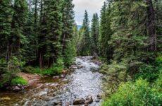 Влияние лесов на природу и жизнь человека