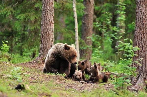 Влияние-лесов-на-природу-и-жизнь-человека-5