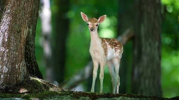 Влияние-лесов-на-природу-и-жизнь-человека-6