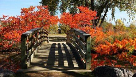 Сумах дерево, его особенности, виды, посадка и уход
