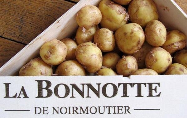 20-интересных-фактов-о-картофеле-11