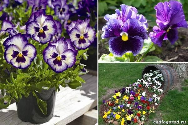 Какие-цветы-посадить-на-даче-1