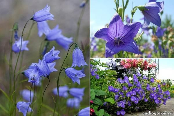 Какие-цветы-посадить-на-даче-10