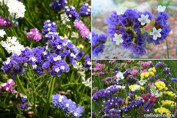 Какие-цветы-посадить-на-даче-14