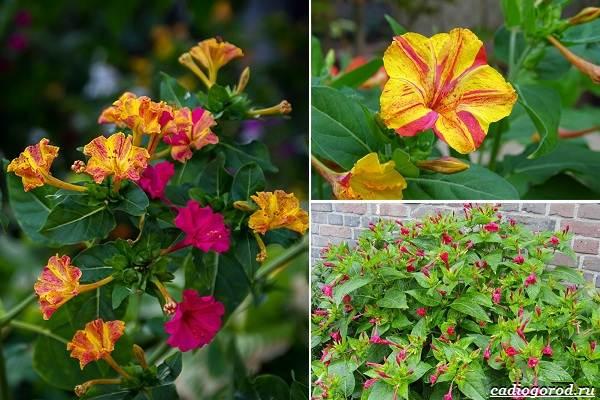 Какие-цветы-посадить-на-даче-15