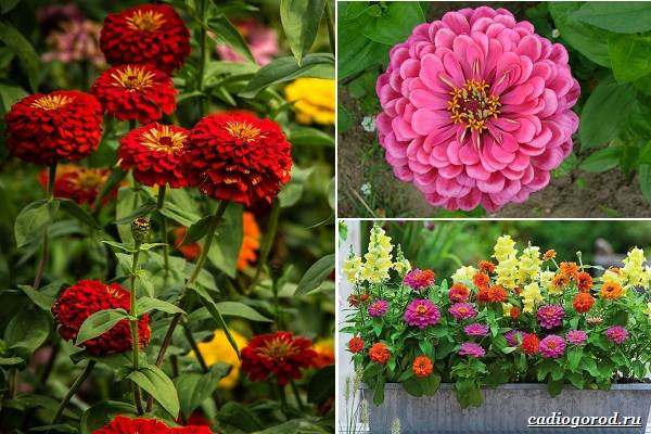 Какие-цветы-посадить-на-даче-17