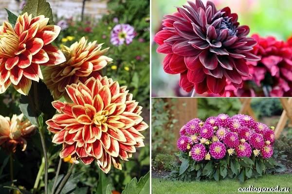 Какие-цветы-посадить-на-даче-18