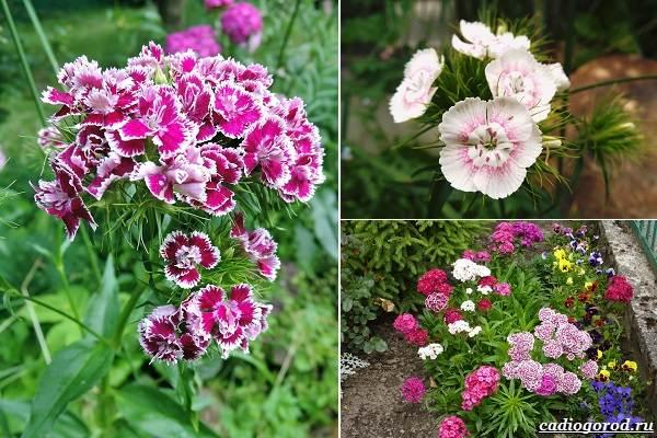 Какие-цветы-посадить-на-даче-2