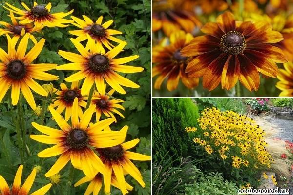 Какие-цветы-посадить-на-даче-20