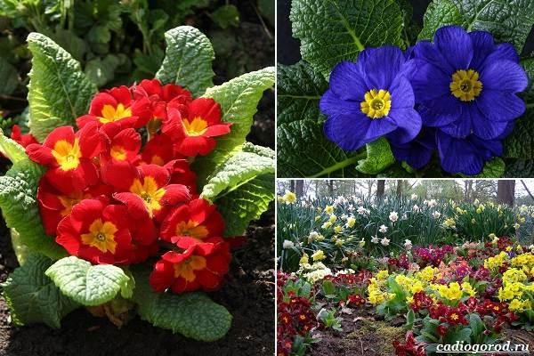 Какие-цветы-посадить-на-даче-21