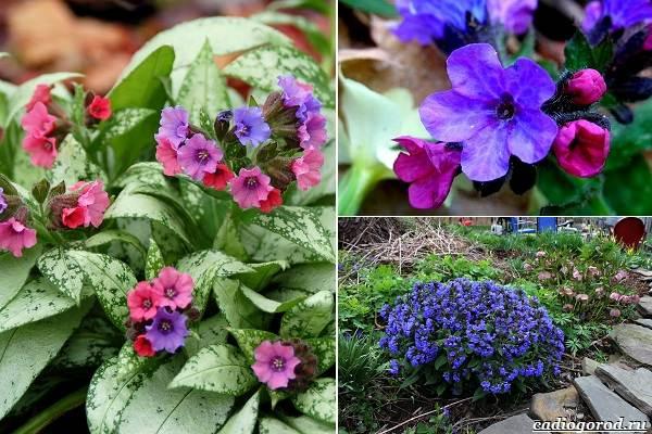 Какие-цветы-посадить-на-даче-22