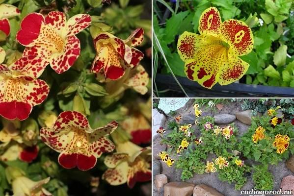 Какие-цветы-посадить-на-даче-25
