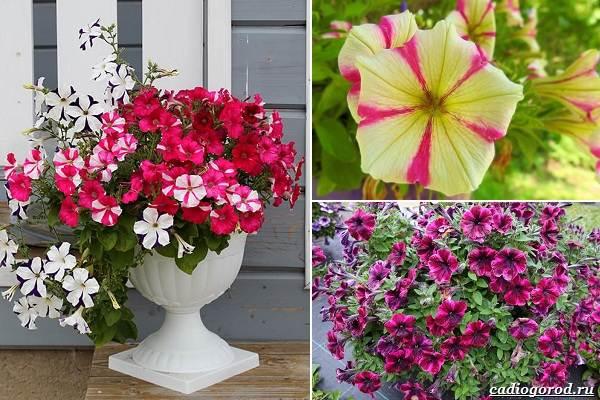 Какие-цветы-посадить-на-даче-27