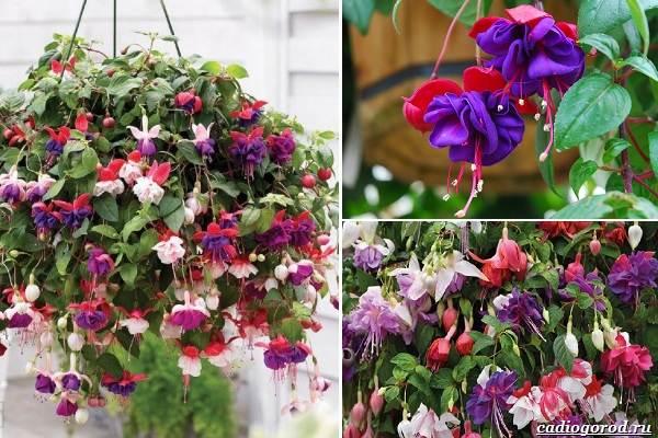 Какие-цветы-посадить-на-даче-28