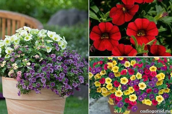 Какие-цветы-посадить-на-даче-29