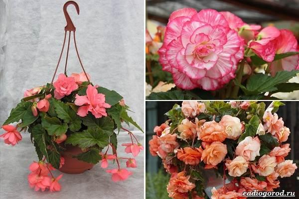 Какие-цветы-посадить-на-даче-30