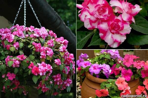 Какие-цветы-посадить-на-даче-31