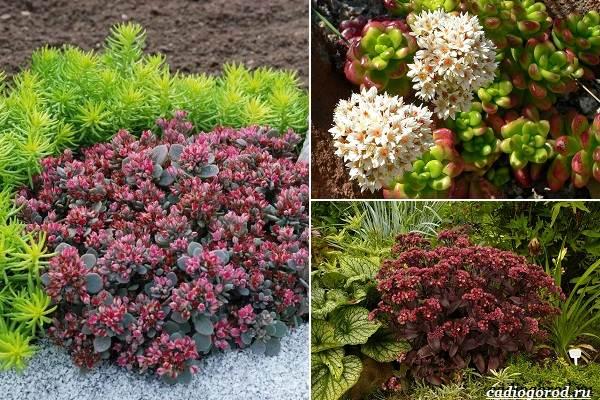 Какие-цветы-посадить-на-даче-33